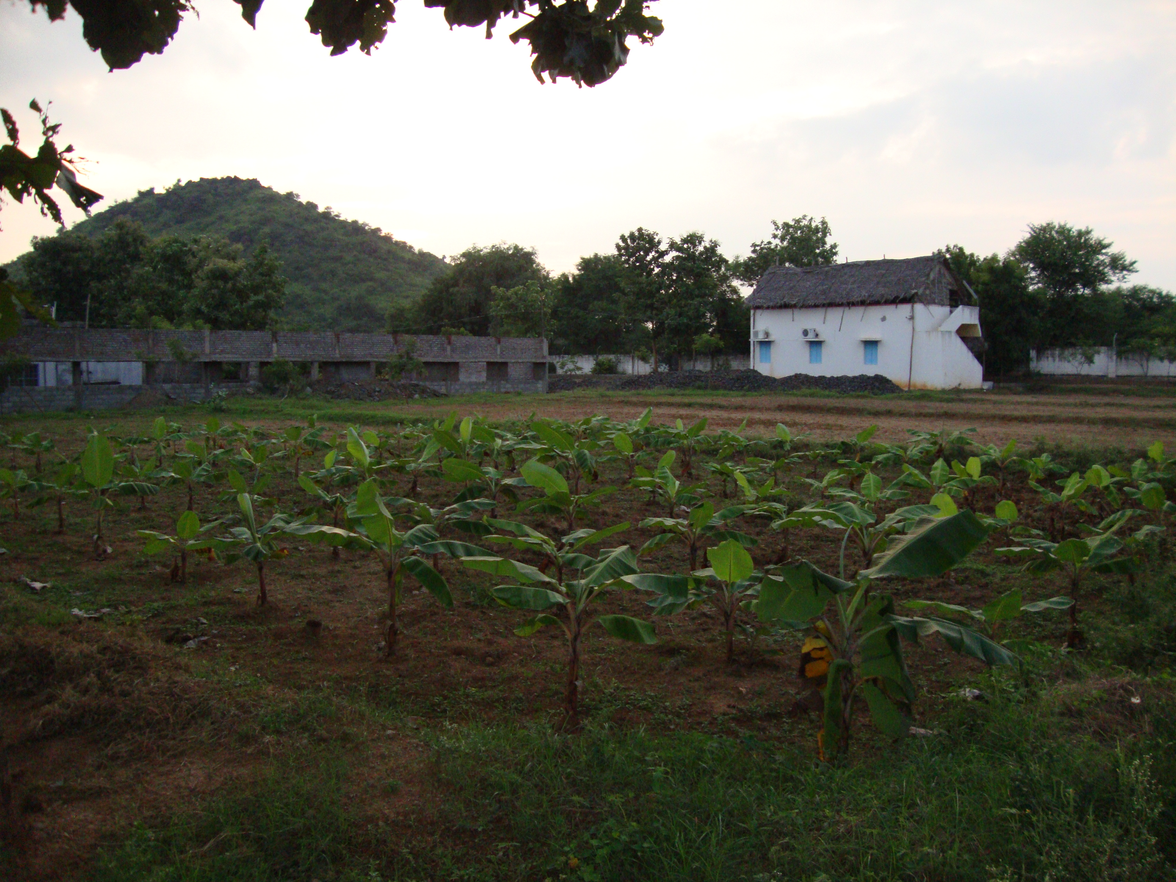 Vedic farming